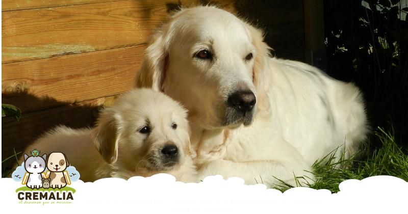 imagen-destacada-blog-cremalia-perra-embarazada-800x420.fw
