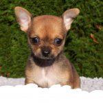 imagen-destacada-blog-cremalia-problemas-psicologicos-perros-800x420.fw