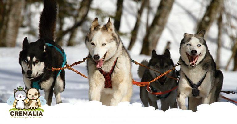 imagen-destacada-blog-dolor-perros-cremalia-800x420.fw