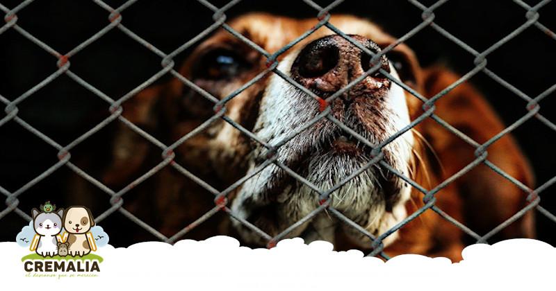 imagen-destacada-blog-el-abandono-de-animales-cremalia-800x420.fw
