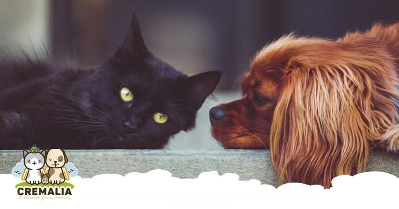 Consejos para mantener el bienestar de nuestras mascotas durante un confinamiento