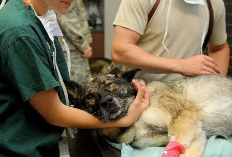 veterinario-cremalia